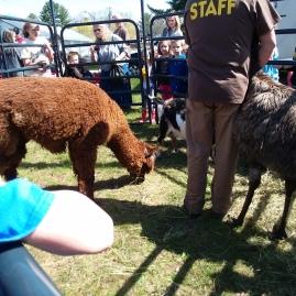 Alpaca and Emu