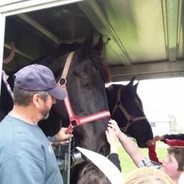 Horses at the Expo Braden