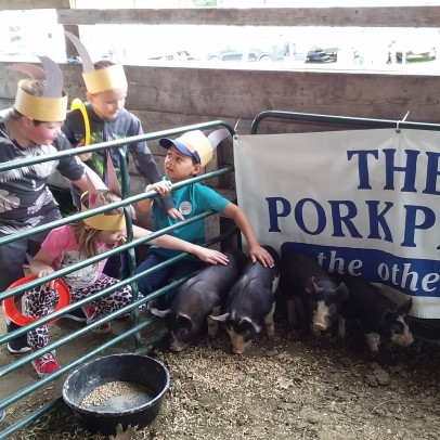More Piglets at the Expo