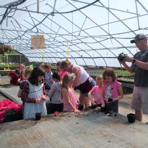 Planting Watermelon Seedlings